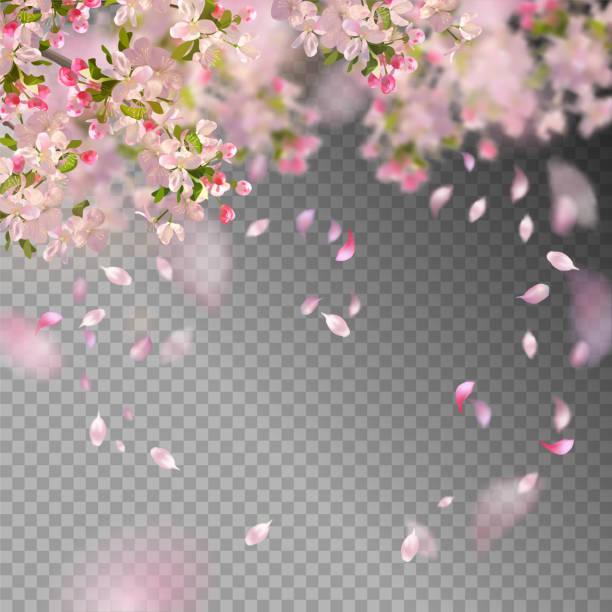 stockillustraties, clipart, cartoons en iconen met lente kersenbloesem - bloesem