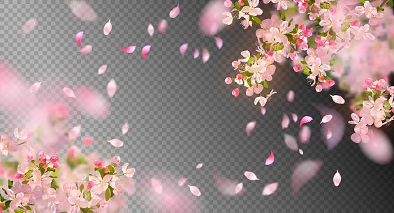 Primavera flor de cerezo