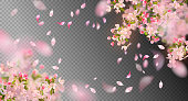 Vector background with spring cherry blossom. Sakura branch in springtime with falling petals and blurred transparent elements