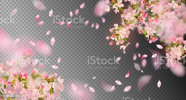 Spring cherry blossom vector id918450742?b=1&k=6&m=918450742&s=612x612&h=s sko8gqz22q9 1ui cinptylnrwppnvsbj acq bos=