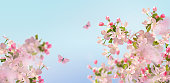 Vector background with spring cherry blossom. Sakura branch in springtime