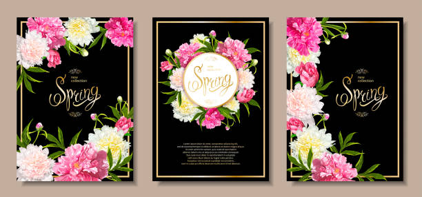 Spring collection backgrounds with peones Set of three floral backgrounds with blooming pink and light yellow peonies, buds, green leaves. Inscription Spring. Template for card, banner on 8 March, Mothers Day, Birthday, Sale, Wedding birthday borders stock illustrations
