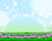 Spring Crocus Landscape.