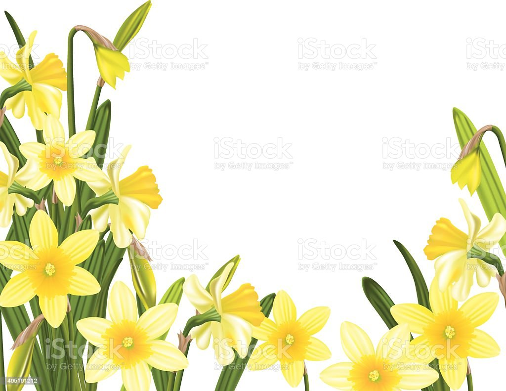 Spring Daffodils Garden vector art illustration
