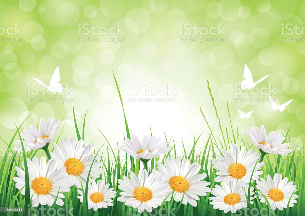 Spring Daisy Background vector art illustration