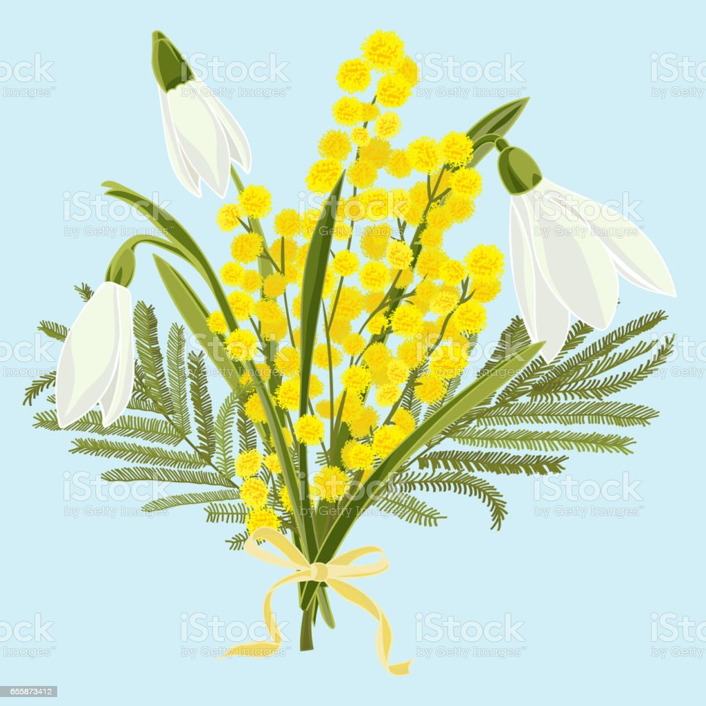 Spring floral background with beautiful snowdrops and mimosa flower vector art illustration