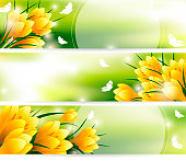 Beautiful Yellow Flowers in Garden