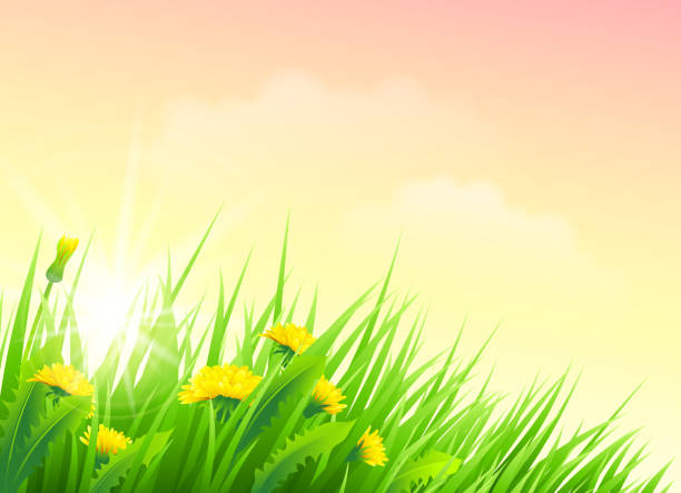 stockillustraties, clipart, cartoons en iconen met spring flower - grassenfamilie