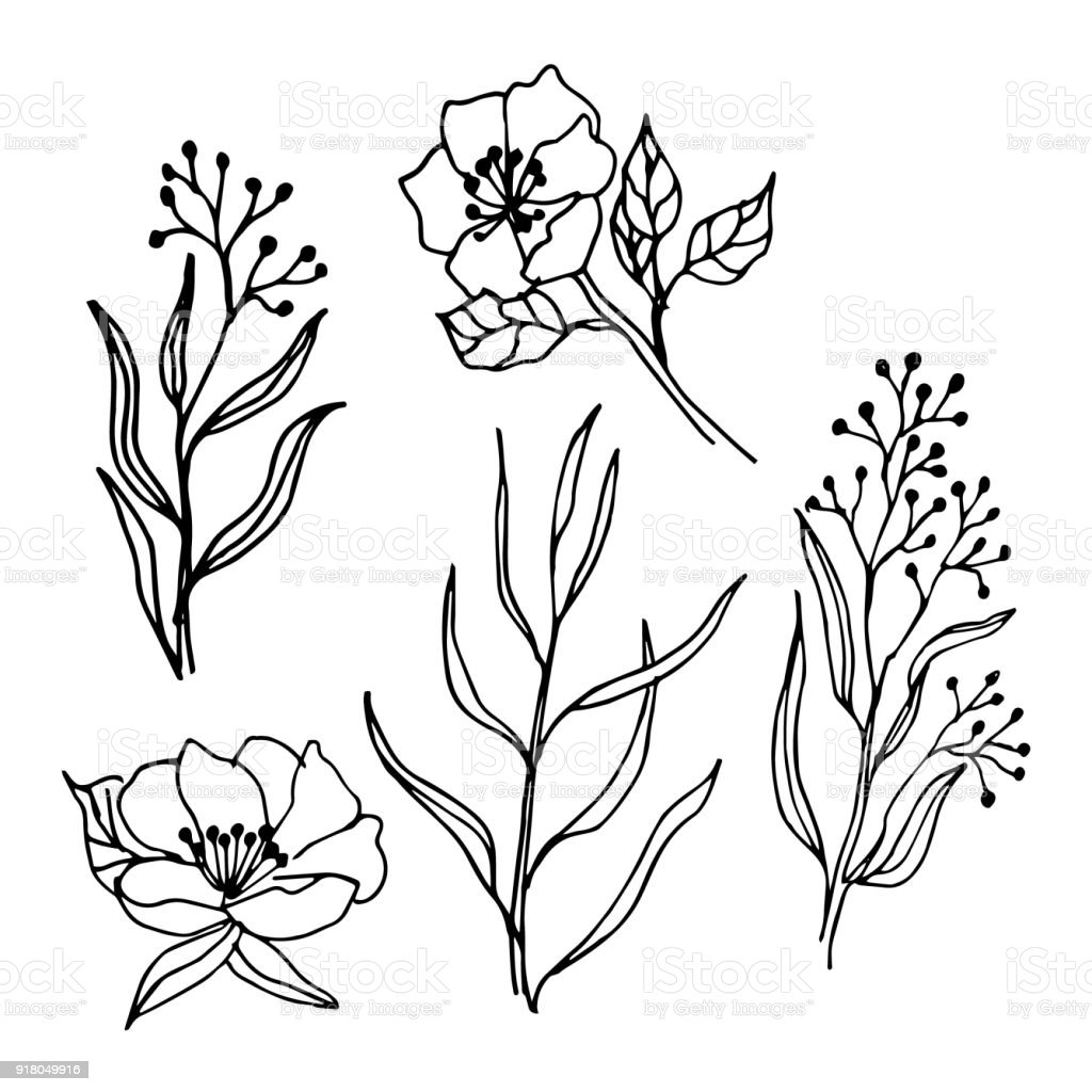 Spring Flowers And Branches Line Art Drawing Set Stock Vector Art
