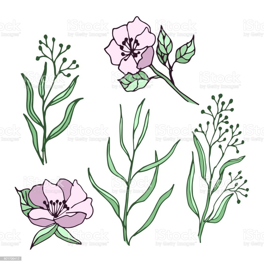 Spring Flowers And Leaves Set Of Drawings Ideal For Using In Wedding