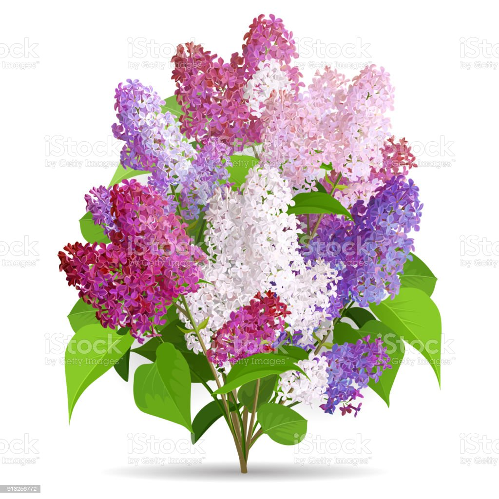 Spring Flowers Bouquet Of Lilac Isolated On White Background Stock
