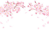 istock Spring flowers: cherry blossoms and falling petals arched frame watercolor illustration trace vector 1208516815