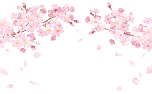 春の花:桜と落ちる花びらアーチ型フレーム水彩画のトレースベクトル - 桜点のイラスト素材/クリップアート素材/マンガ素材/アイコン素材