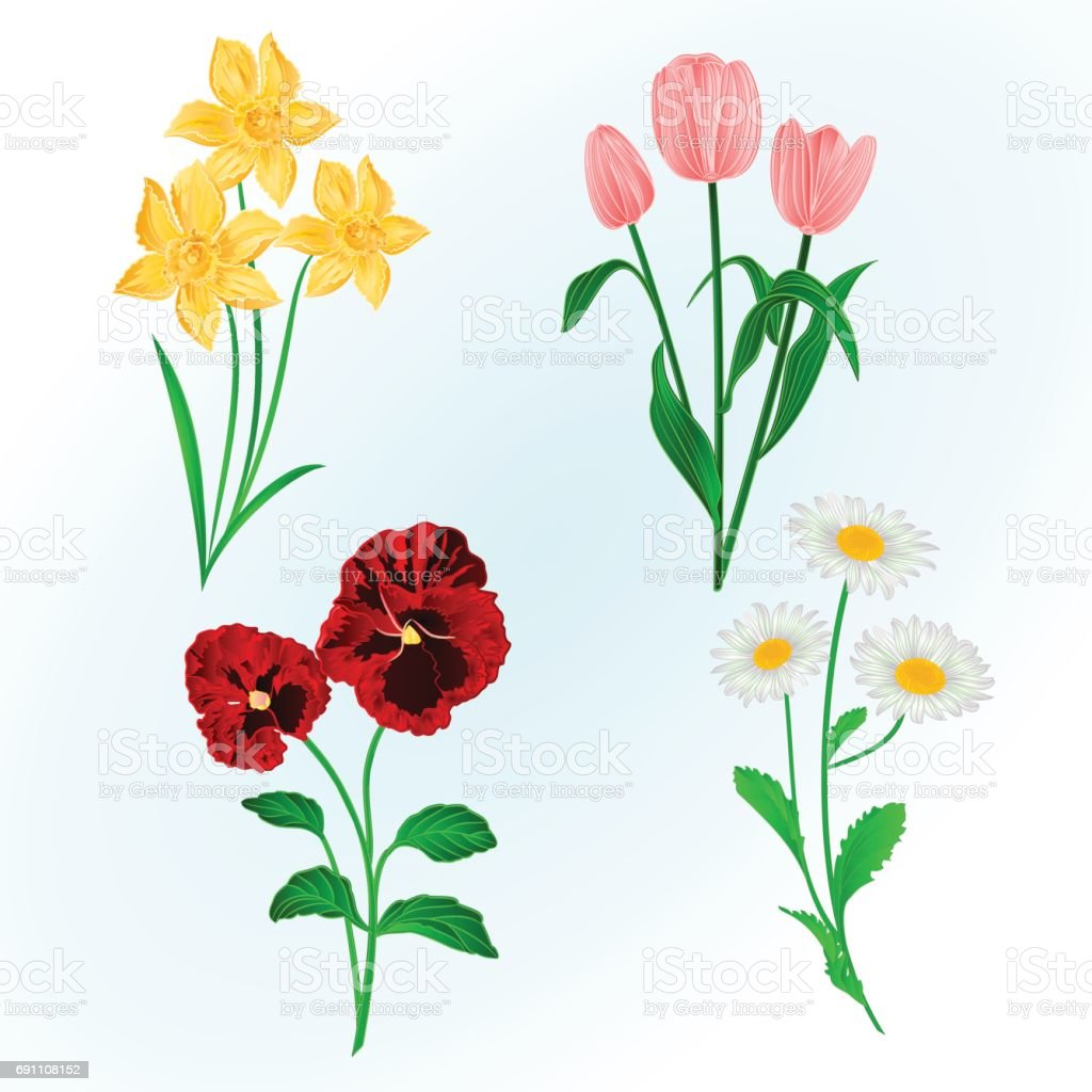 Spring Flowers Daffodils Pansiestulips And Daisies Vintage Hand Draw