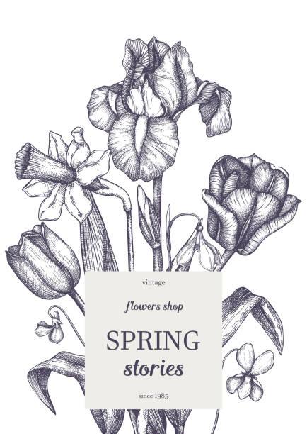 frühlingsblumen design 121 - alpenveilchen stock-grafiken, -clipart, -cartoons und -symbole