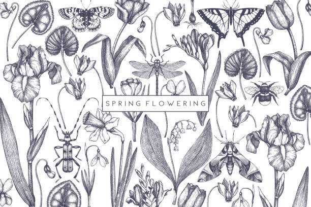 Spring flowers design Spring flowers background. Hand drawn insects illustration. Floral design. Botanical drawings with butterflies. Perfect for branding, greeting card, invitation, wrapping paper, banner. Vintage art. iris plant stock illustrations