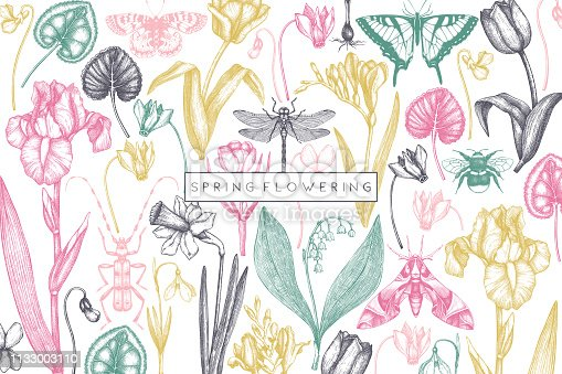 Spring flowers background. Hand drawn insects illustration. Floral design. Botanical drawings with butterflies. Perfect for branding, greeting card, invitation, wrapping paper, banner. Vintage art.
