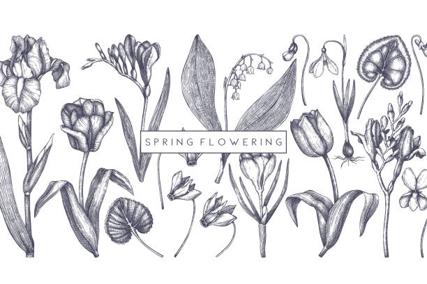 frühlingsblumen design - alpenveilchen stock-grafiken, -clipart, -cartoons und -symbole