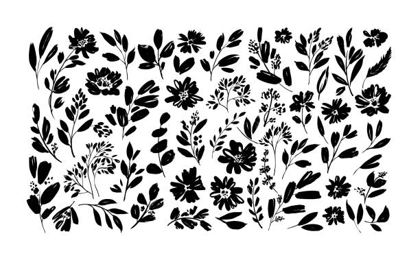 ilustrações, clipart, desenhos animados e ícones de flores da primavera desenhados à mão conjunto vetorial. silhuetas de flores de pincel preto. tinta desenhando plantas silvestres, ervas ou flores - papoula planta
