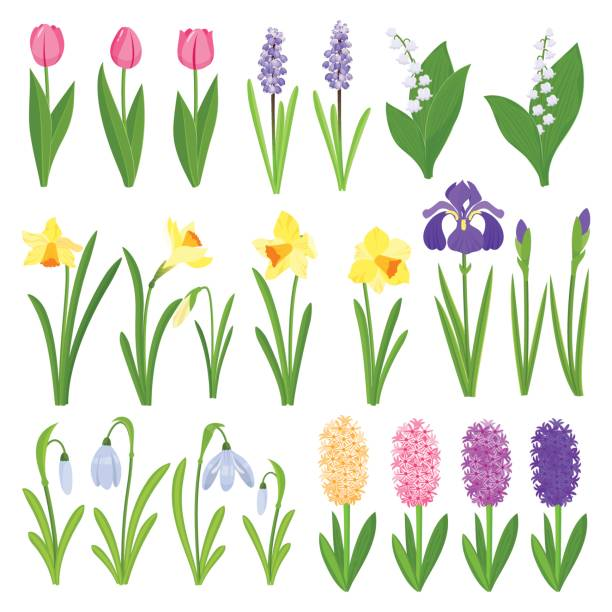 frühling blumen. iris, lilien des tales, tulpen, narzissen, krokusse und andere primeln. garten design-ikonen, die isoliert auf weißem hintergrund - narzissen stock-grafiken, -clipart, -cartoons und -symbole