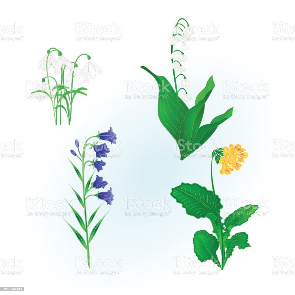 spring flowers lily of the valley snowdropsbluebell campanula and primrose vintage hand draw