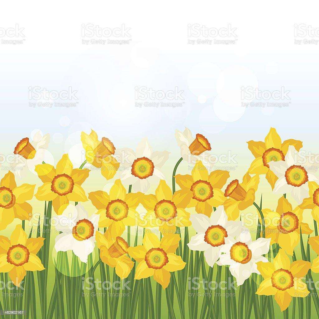 Spring flowers narcissus seamless pattern horizontal border.