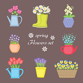 Spring flowers set. Bouquet of flowers planted in different pots. Watering can, basket, rubber boots. Orchid, chamomile, bells, tulips, violets, crocuses.