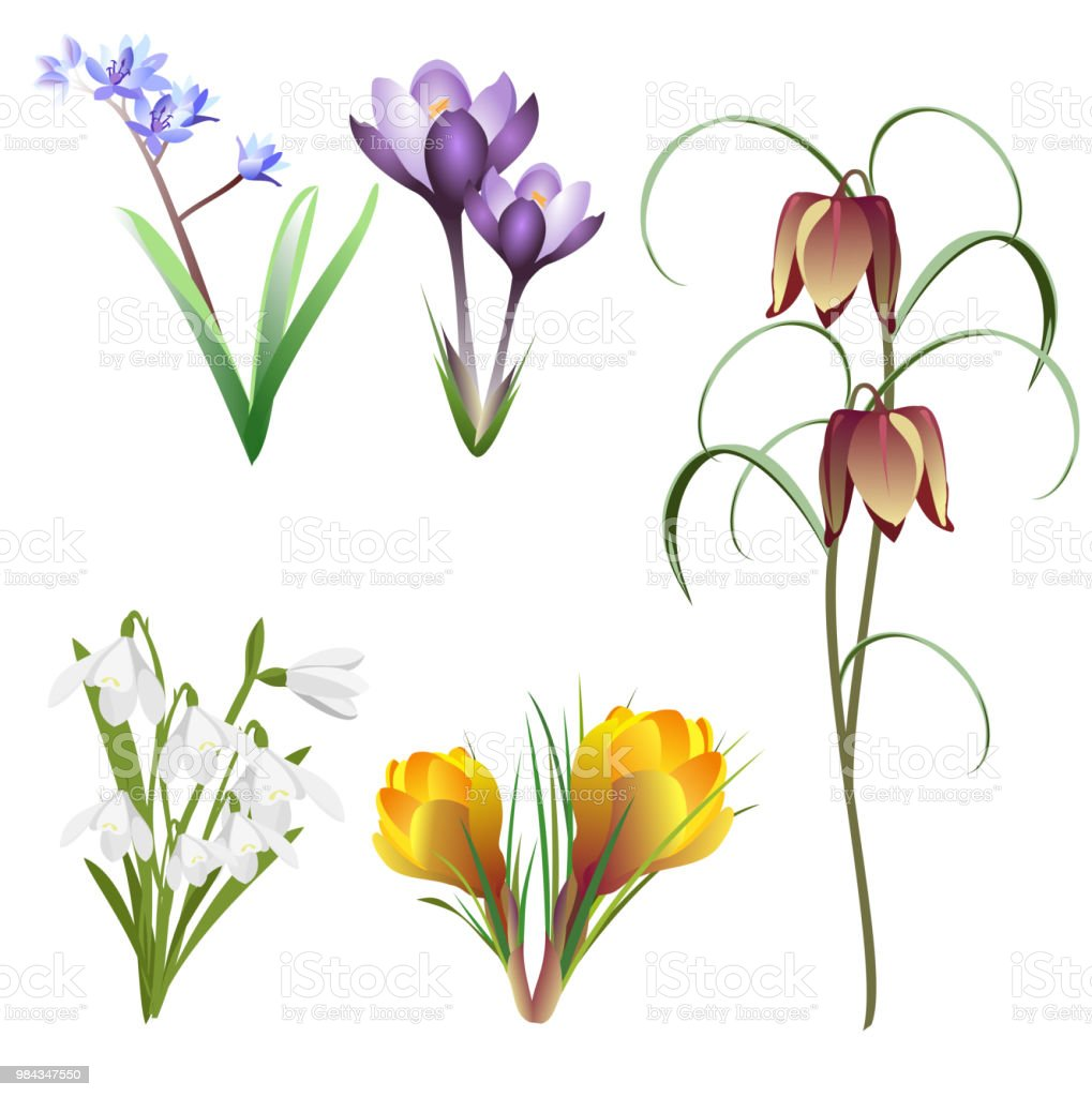 Spring flowers (saffron, snowdrop, checkered lily, bluebell), set of vector illustrations.