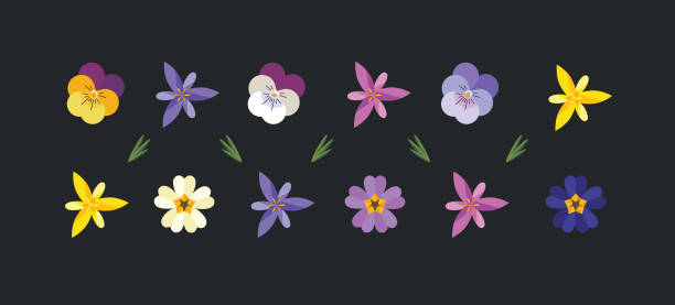 Spring flowers set. Spring flowers set wallpaper including primrose, crocus and pansy. primula stock illustrations