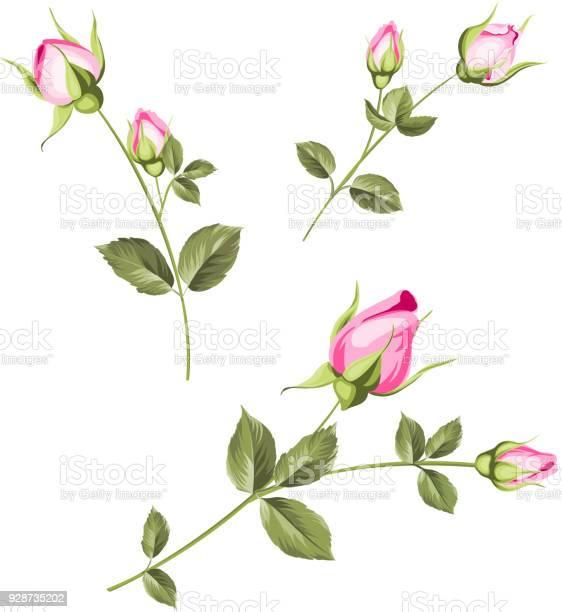 Spring flowers set vector id928735202?b=1&k=6&m=928735202&s=612x612&h=o 21lr6vjnonf877ico63hebb6hfenlvzgvqfh2iuqo=
