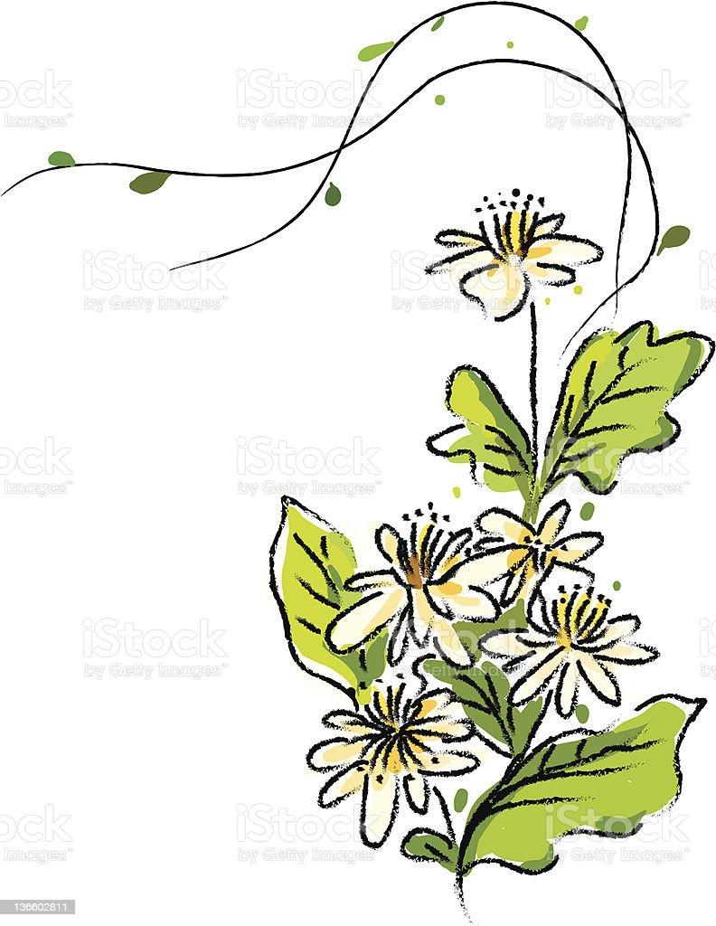 spring flowers sketch vector art illustration