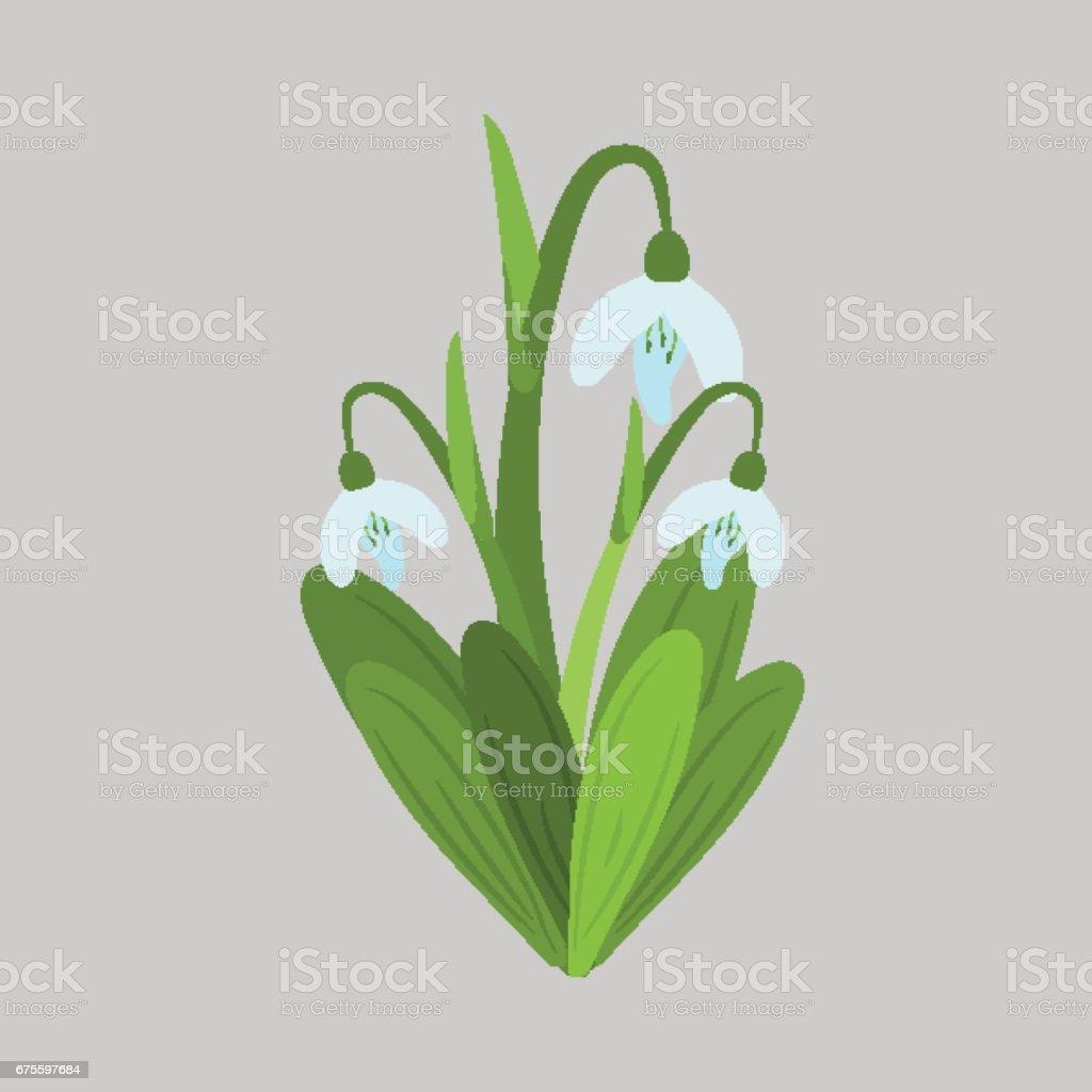 Spring flowers. Snowdrops vector sketch