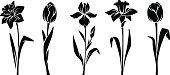 Spring flowers. Vector black silhouettes.