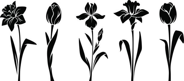 Spring flowers. Vector black silhouettes. Vector black silhouettes of spring flowers (tulips, narcissus and iris) isolated on a white background. plant stem stock illustrations