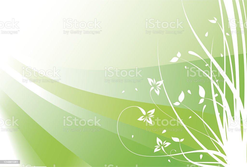 Fiori Di Primavera Vettoriale E Ornamento Floreale Sfondo Verde