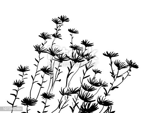 bunch of wild flowers in ink drawing