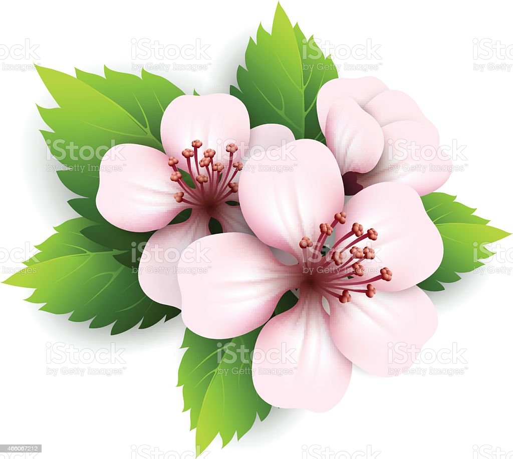 Spring Flowers Vector Illustration Stock Vector Art More Images Of