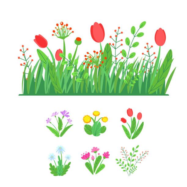 spring garden blooming flowers with grass border vector. simple plant bouquet illustration. fashion floral springtime nature elements isolated on white background in minimal style - spring fashion stock illustrations, clip art, cartoons, & icons