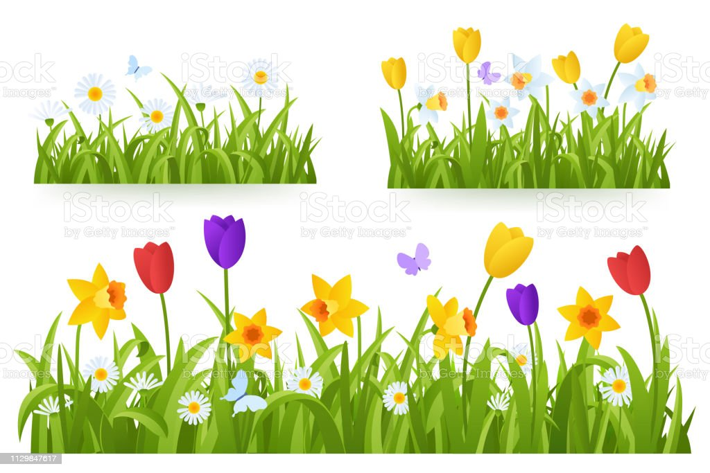 Spring grass border with early spring flowers and butterfly isolated on white background. Illustration of colored tulips, daffodils and daisies. Garden bed. Springtime design element. Vector eps 10. Spring grass border with early spring flowers and butterfly isolated on white background. Illustration of colored tulips, daffodils and daisies. Garden bed. Springtime design element. Vector eps 10. Animal Markings stock vector
