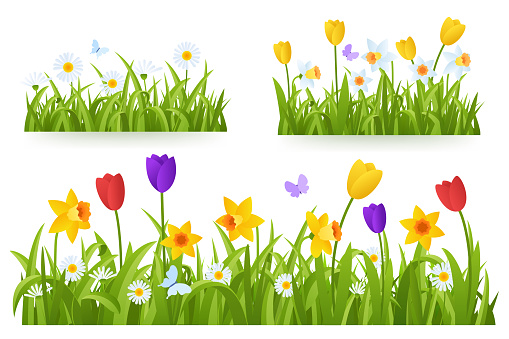 Spring grass border with early spring flowers and butterfly isolated on white background. Illustration of colored tulips, daffodils and daisies. Garden bed. Springtime design element. Vector eps 10.