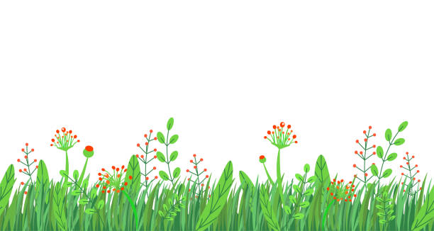 Wildflower Meadow Cartoon Illustrations, Royalty-Free ...