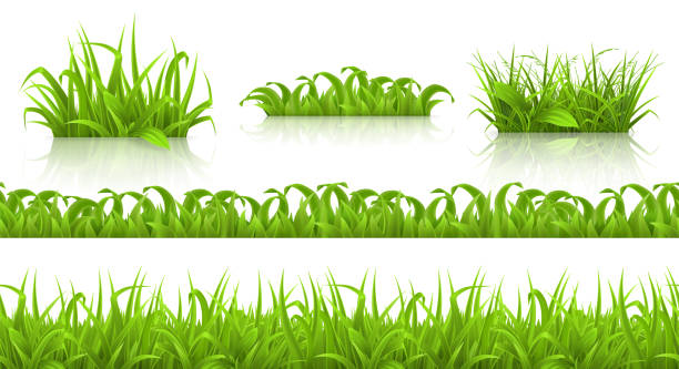 spring grass seamless pattern and icons, 3d vector - grass stock illustrations