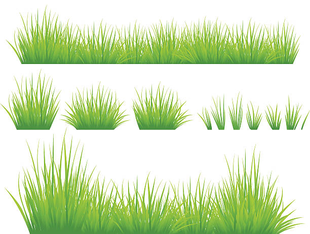 stockillustraties, clipart, cartoons en iconen met spring grass - grasspriet