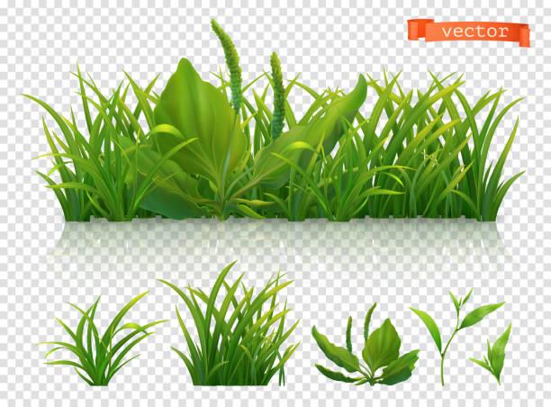 ilustraciones, imágenes clip art, dibujos animados e iconos de stock de primavera. césped verde, icono de vector realista 3d conjunto - grass