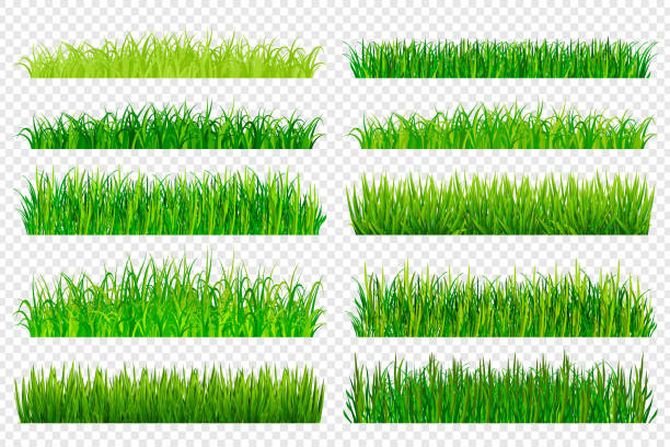 ilustrações de stock, clip art, desenhos animados e ícones de spring green grass borders isolated on transparent background. vector illustration - erva