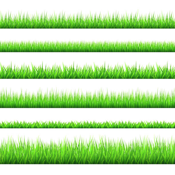 spring green grass  borders  set  isolated on white background. - grass stock illustrations