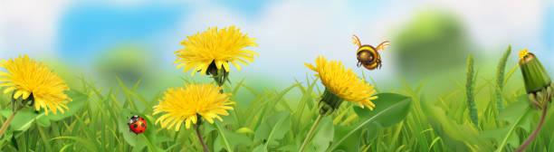 ilustrações de stock, clip art, desenhos animados e ícones de spring landscape. green grass and yellow dandelions. 3d vector horizontal panorama - inseto himenóptero
