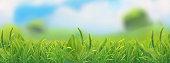Spring landscape. Green grass vector illustration