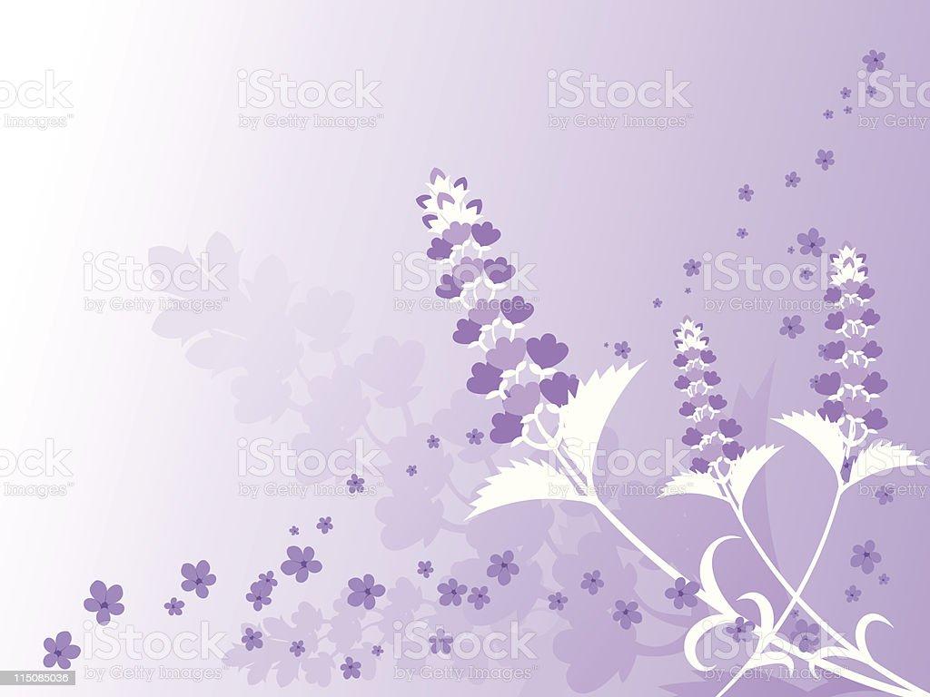 Spring - Lavender Background vector art illustration