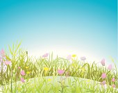 Landscape, spring meadow with variable flowers.